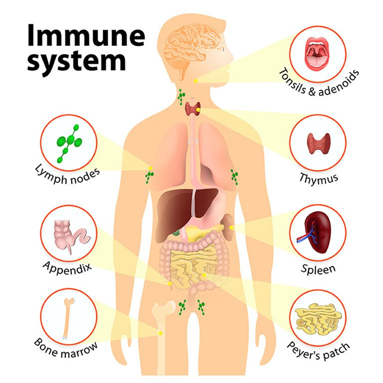 Chicago Immune System Deficiencies Doctor